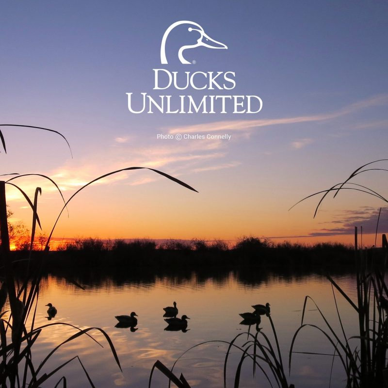 10 Most Popular Duck Hunting Iphone Wallpaper FULL HD 1920×1080 For PC Desktop 2018 free download ducks unlimited mobile wallpaper 800x800