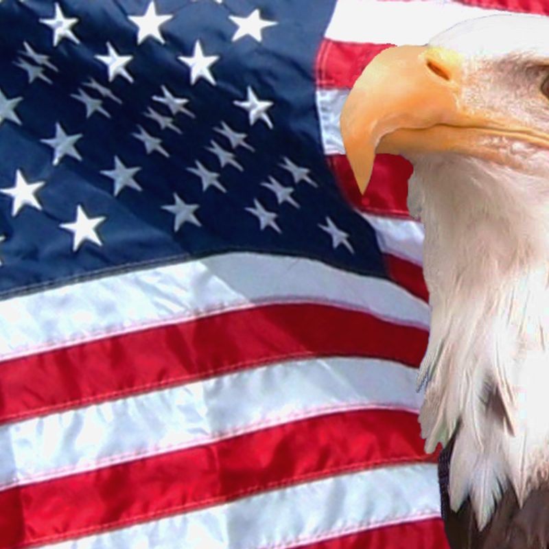 10 Latest Usa Flag Eagle Wallpaper FULL HD 1920×1080 For PC Background 2020 free download eagle free download hd desktop wallpaper backgrounds images page 4 800x800