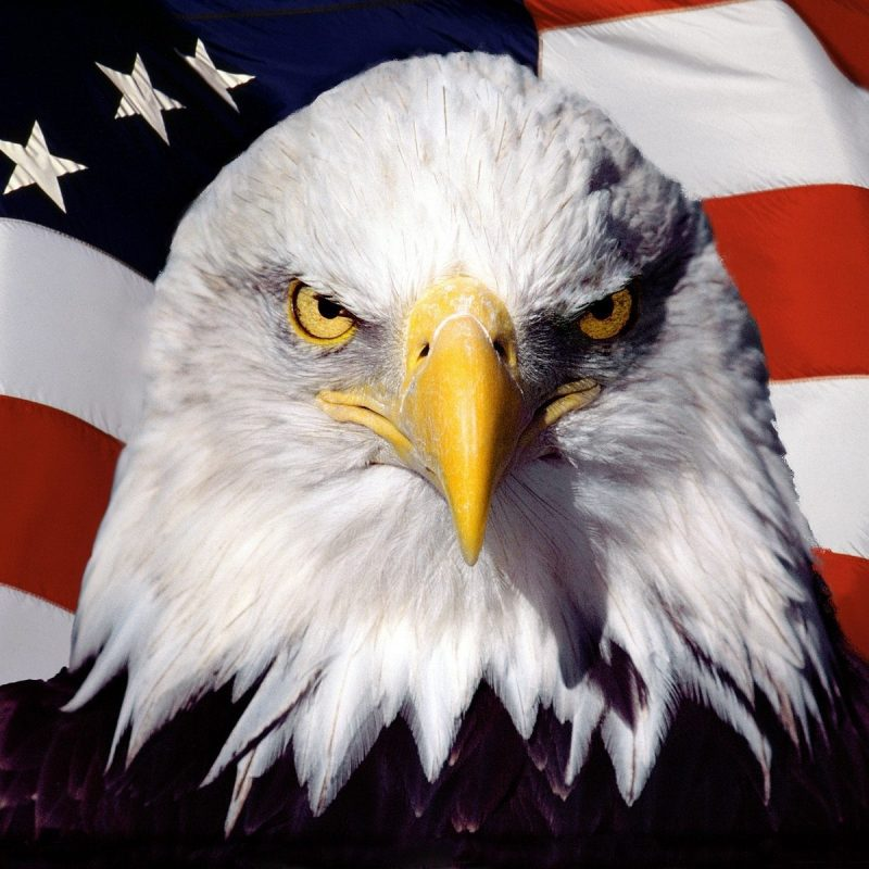 10 Most Popular American Flag Eagle Background FULL HD 1080p For PC Background 2020 free download eagle on the background of the american flag wallpapers and images 800x800