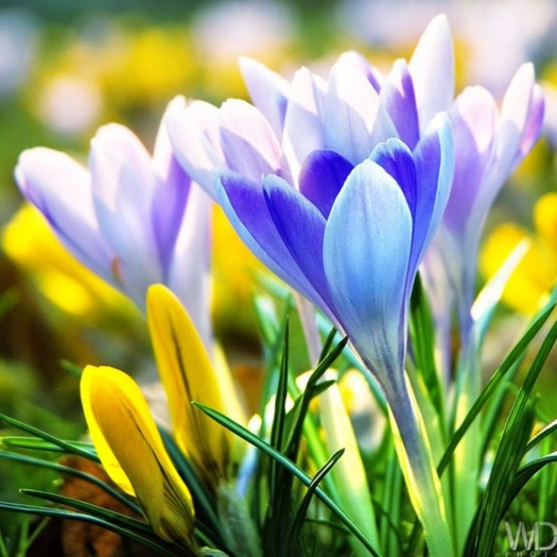 10 Top Free Early Spring Wallpaper FULL HD 1920×1080 For PC Background 2021 free download early spring flowers wallpaper background image texas pinterest 800x800