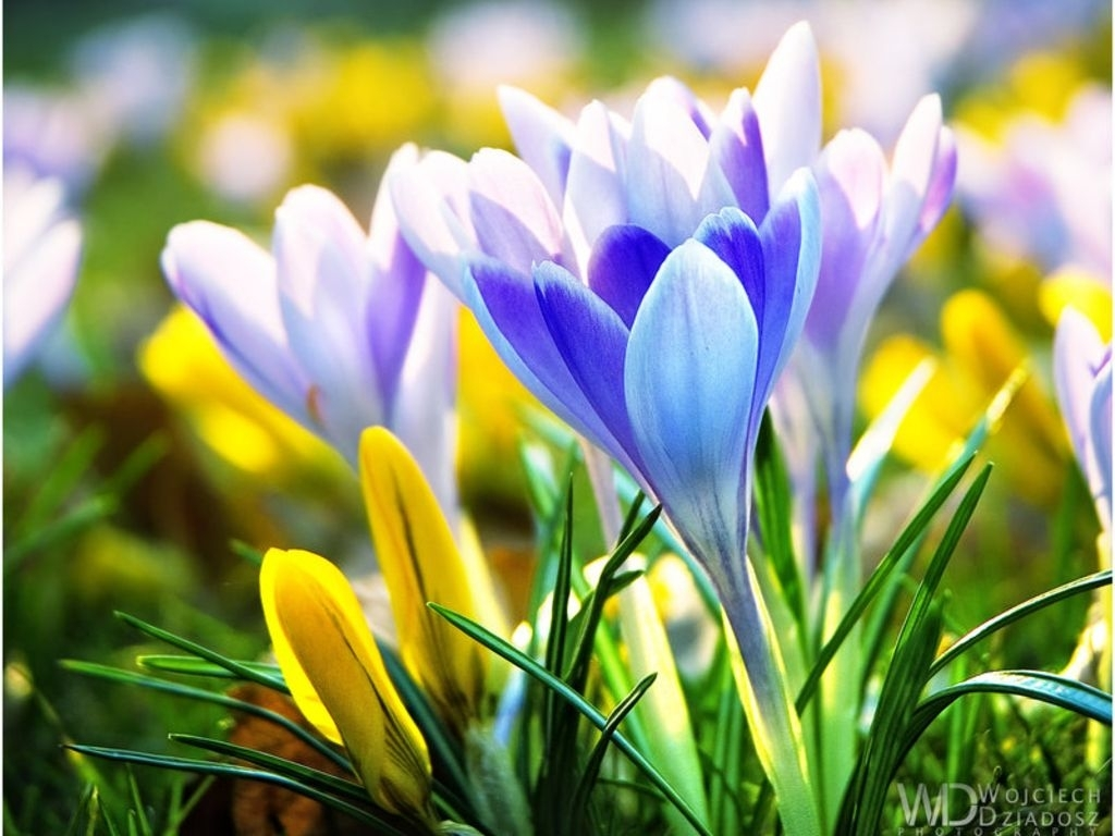 early spring flowers wallpaper background image   texas   pinterest