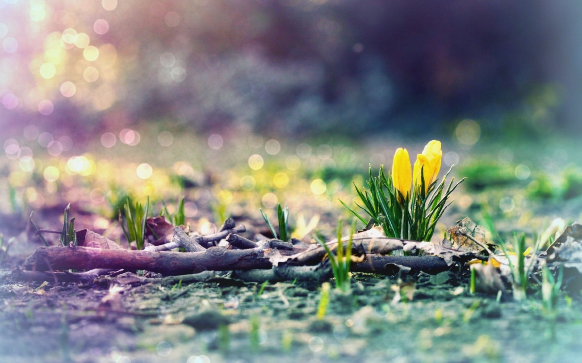early spring hd wallpaper (50+ images)