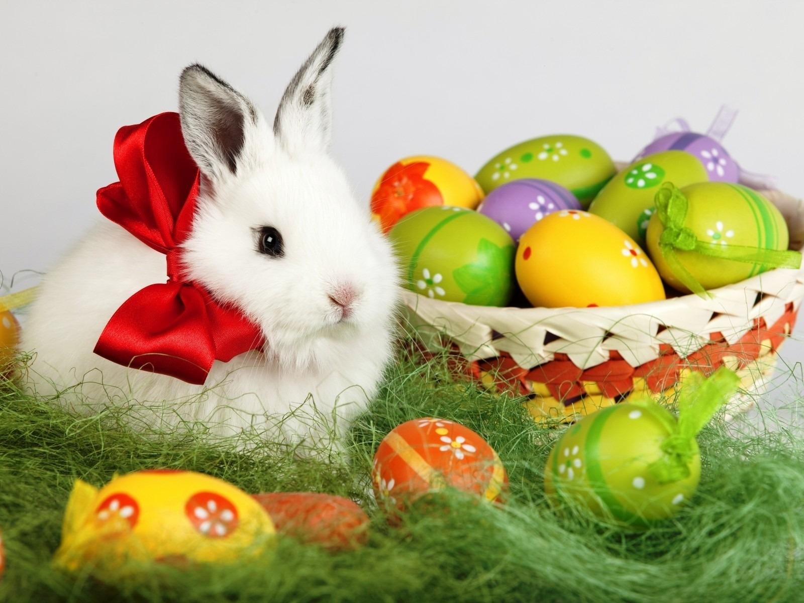 easter bunny desktop wallpaper free #6931815