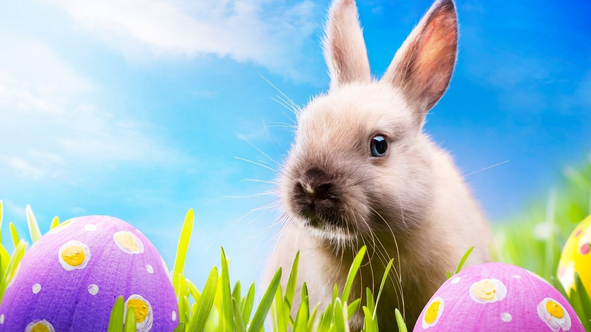 easter-bunny-images-background-hd-wallpaper - the crapulent