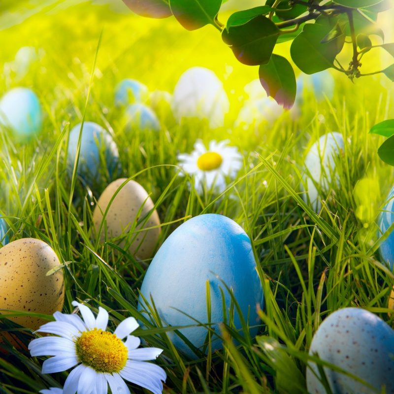 10 Best Easter Egg Desktop Wallpaper FULL HD 1080p For PC Desktop 2020 free download easter egg hunt e29da4 4k hd desktop wallpaper for 4k ultra hd tv 800x800