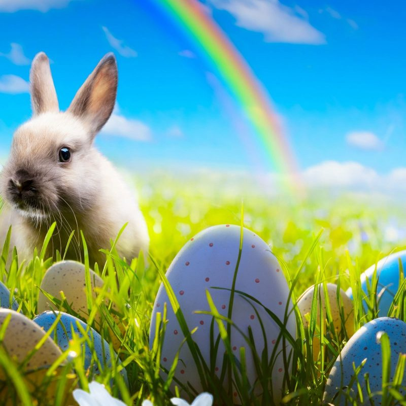 10 Most Popular Easter Bunny Wallpaper Backgrounds FULL HD 1920×1080 For PC Background 2018 free download easter rabbit wallpaper hd 19315 baltana 800x800