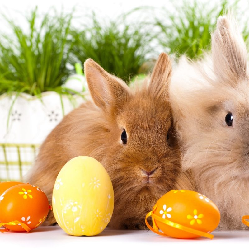 10 Most Popular Easter Bunny Wallpaper Backgrounds FULL HD 1920×1080 For PC Background 2018 free download easter wallpapers free download cute wallpapers for elecrtonics 800x800