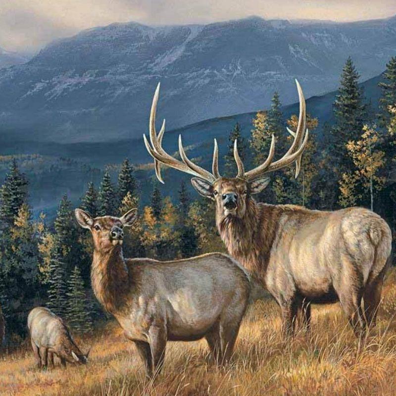 10 Top Rocky Mountain Elk Wallpaper FULL HD 1920×1080 For PC Background 2020 free download elk wallpapers full hd 1080p best hd elk wallpapers d screens 800x800