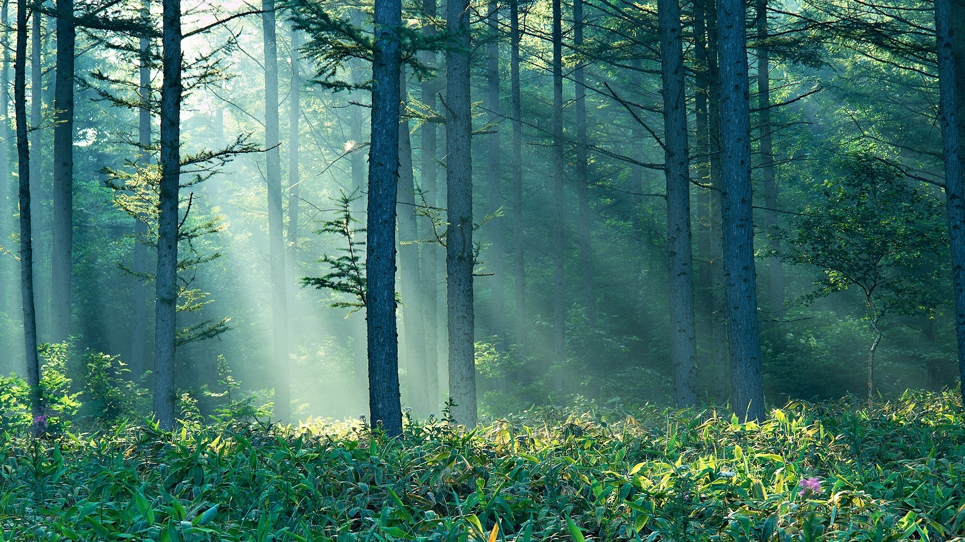 enchanted forest background tumblr 11 | background check all