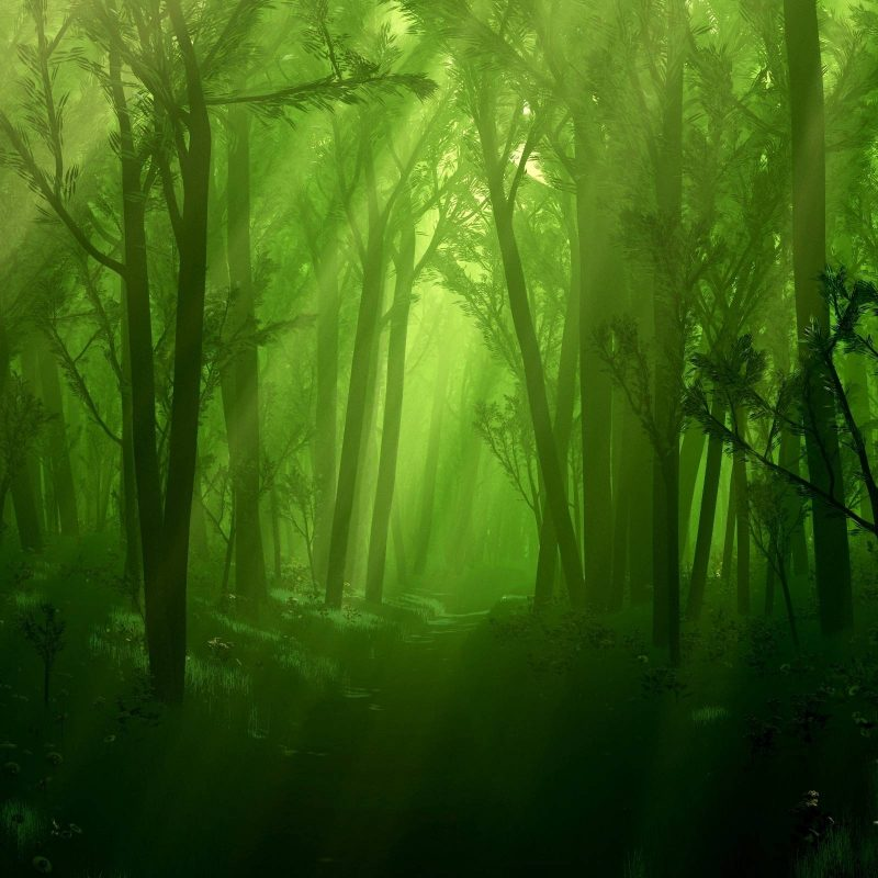 10 Most Popular Enchanted Forest Background Tumblr FULL HD 1920×1080 For PC Background 2018 free download enchanted forest background tumblr 6 background check all 800x800