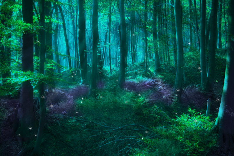 10 Most Popular Dark Enchanted Forest Background FULL HD 1920×1080 For PC Background 2021 free download enchanted forest background wallpapersafari 800x532