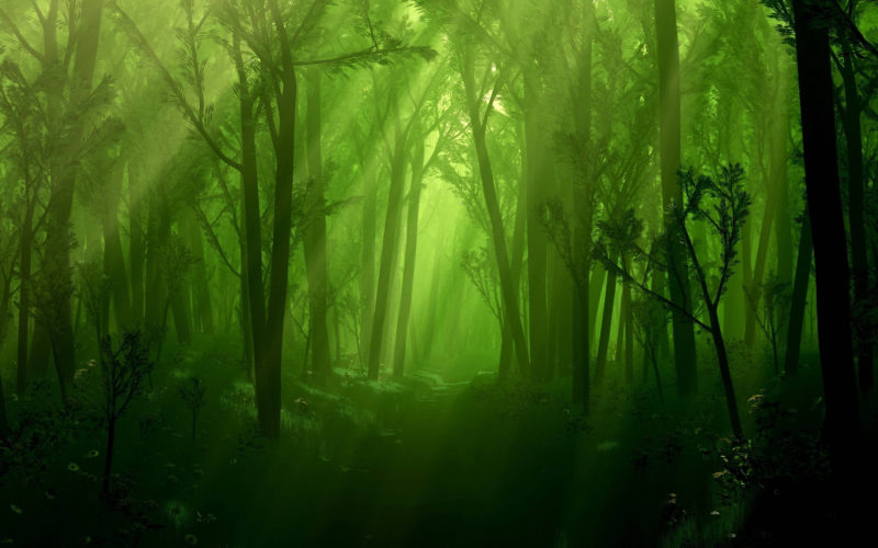 10 Most Popular Dark Enchanted Forest Background FULL HD 1920×1080 For PC Background 2021 free download enchanted forest backgrounds wallpaper cave 800x500