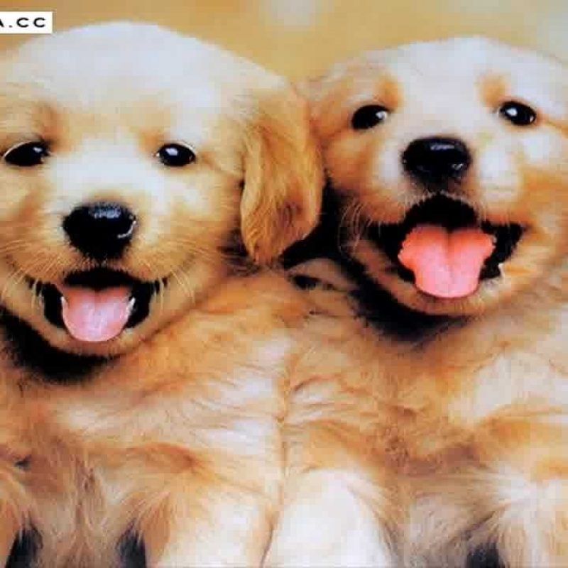 10 Top Images Of Cute Baby Dogs FULL HD 1920×1080 For PC Desktop 2018 free download epic cutest baby dogs in the world cute puppy photos collection 800x800