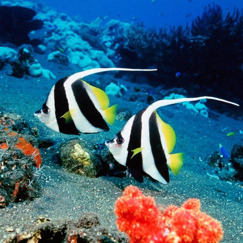 10 Best Tropical Fish Wallpaper Hd FULL HD 1080p For PC Desktop 2021 free download everybodys favorites images tropical fish hd wallpaper and 800x800