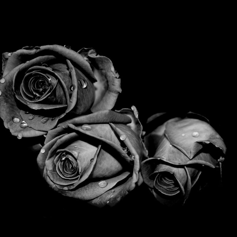 10 New Gothic Black Roses Wallpaper FULL HD 1920×1080 For PC Desktop 2020 free download fading black roses world desktop photography wallpaper collection 800x800