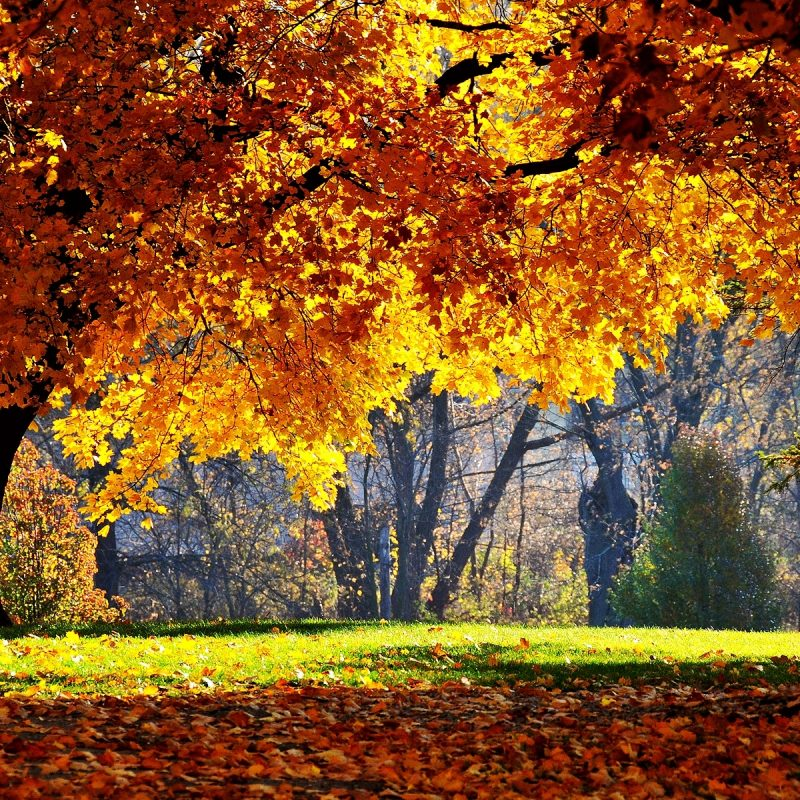 10 Best Fall Backgrounds For Pictures FULL HD 1080p For PC Background 2021 free download fall backgrounds 18184 1920x1200 px hdwallsource 800x800