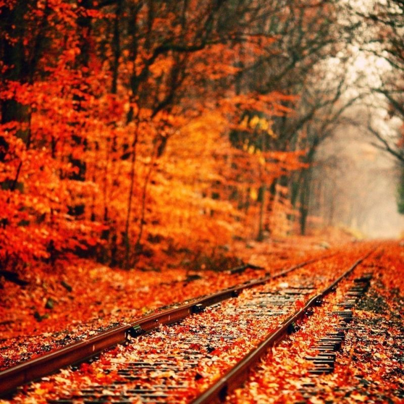 10 Best Fall Backgrounds For Pictures FULL HD 1080p For PC Background 2018 free download fall desktop backgrounds wallpaper cave 800x800