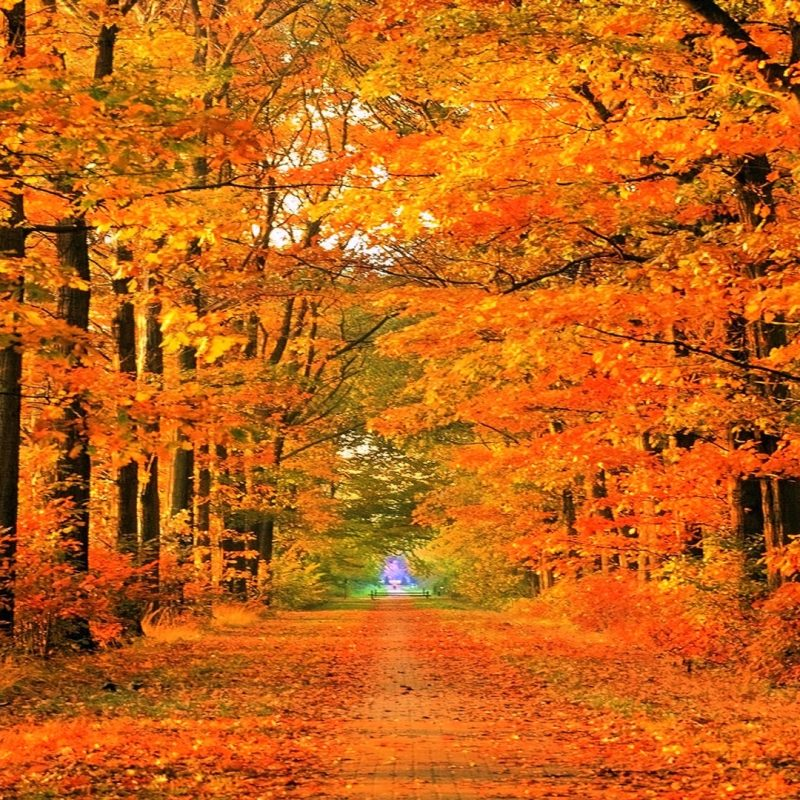 10 New Fall Images For Desktop FULL HD 1920×1080 For PC Background 2021 free download fall desktop photos 6922815 800x800