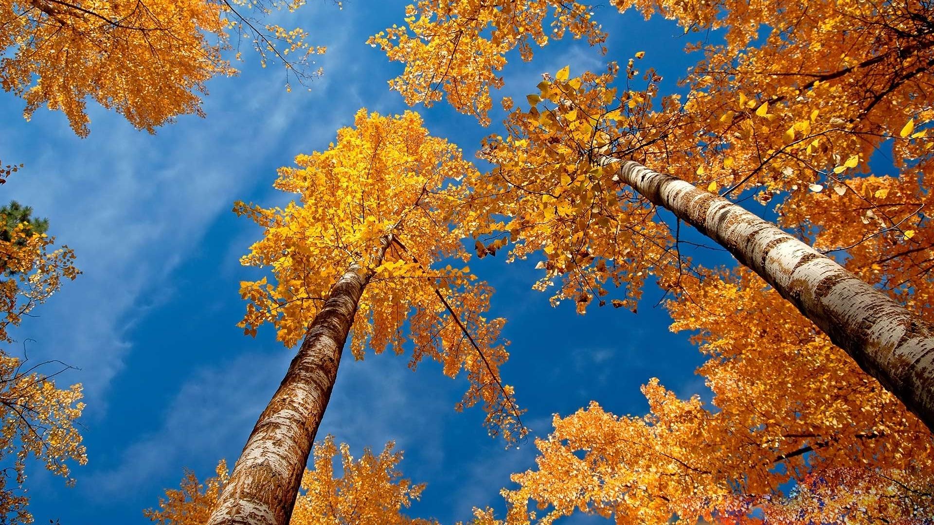 fall desktop wallpaper 15901 1920x1080 px ~ hdwallsource