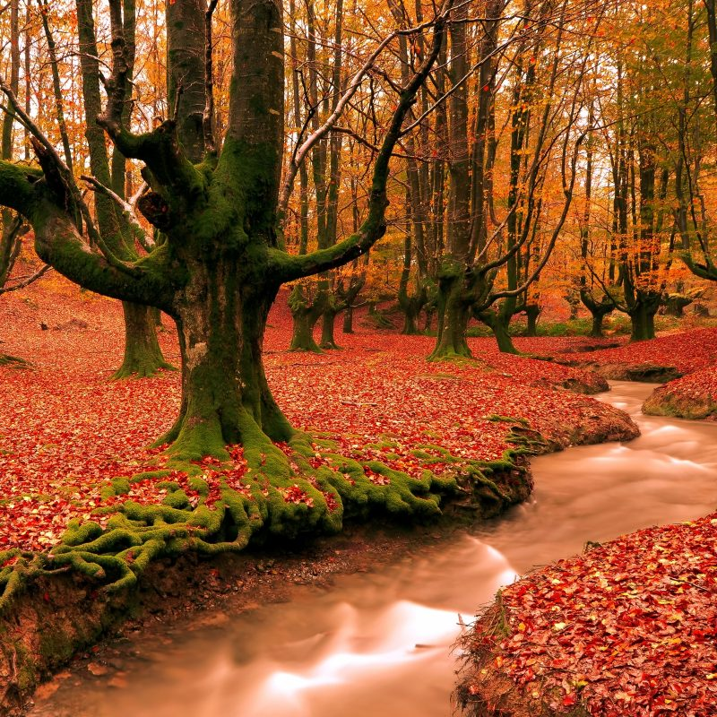 10 Best Autumn Desktop Backgrounds Free FULL HD 1080p For PC Background 2021 free download fall desktop wallpaper free wallpaper hd background 800x800