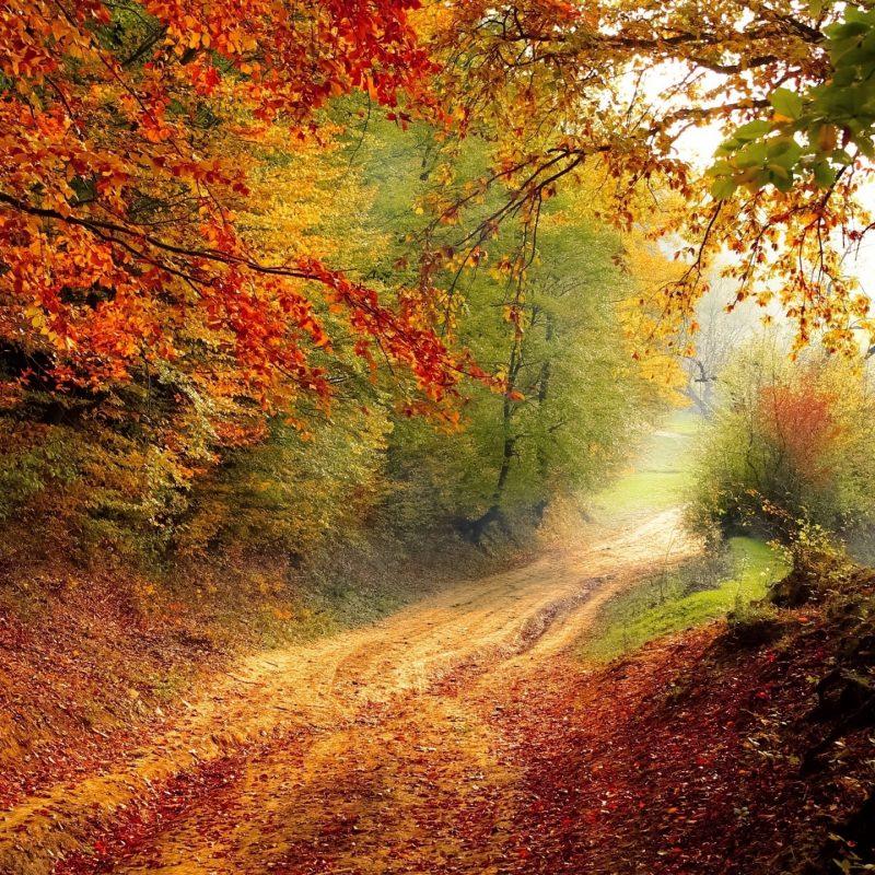 10 Latest Fall Colors Hd Wallpaper FULL HD 1080p For PC Background 2020 free download fall foliage e29da4 4k hd desktop wallpaper for 4k ultra hd tv e280a2 wide 800x800