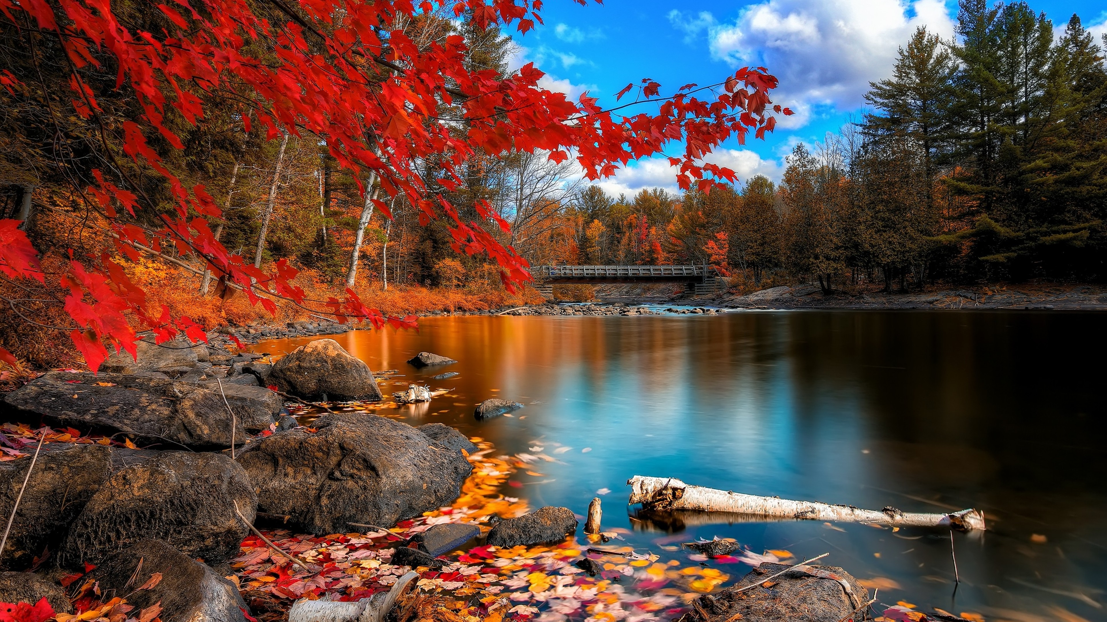 fall foliage, hd nature, 4k wallpapers, images, backgrounds, photos