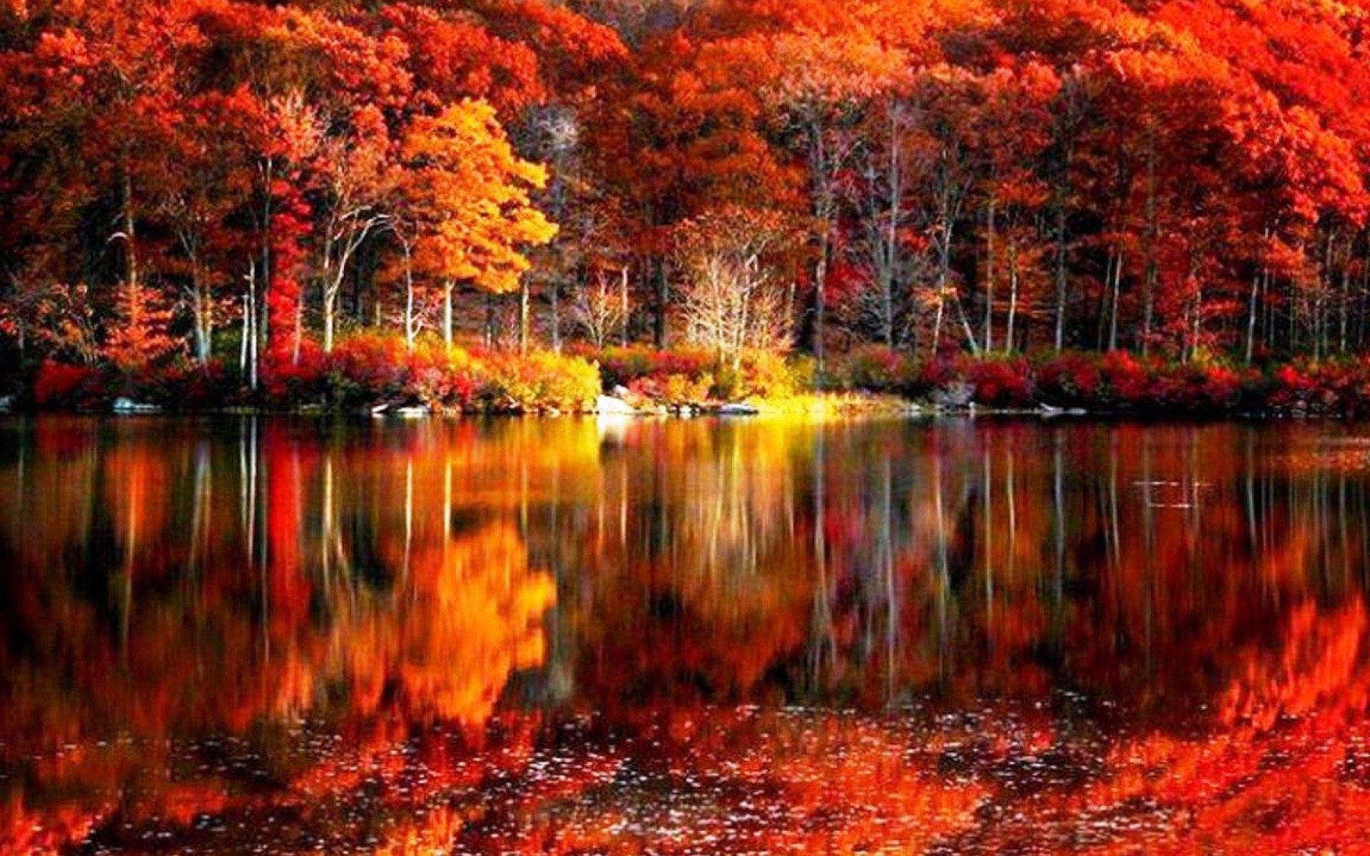 fall foliage wallpaper free download. - media file | pixelstalk
