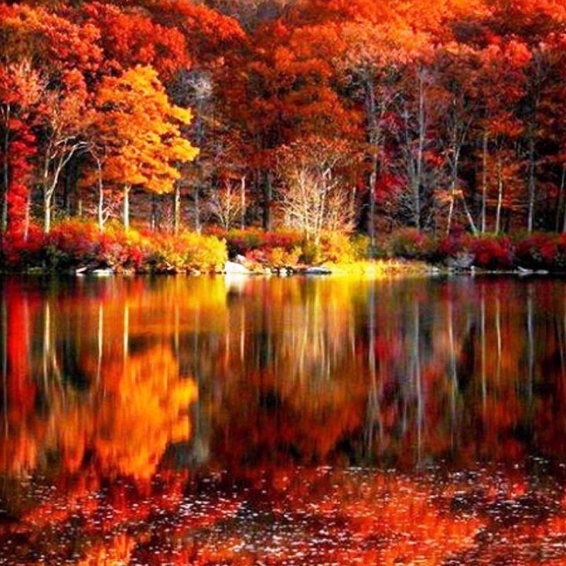 10 Latest Fall Colors Hd Wallpaper FULL HD 1080p For PC Background 2020 free download fall foliage wallpaper free download media file pixelstalk 800x800