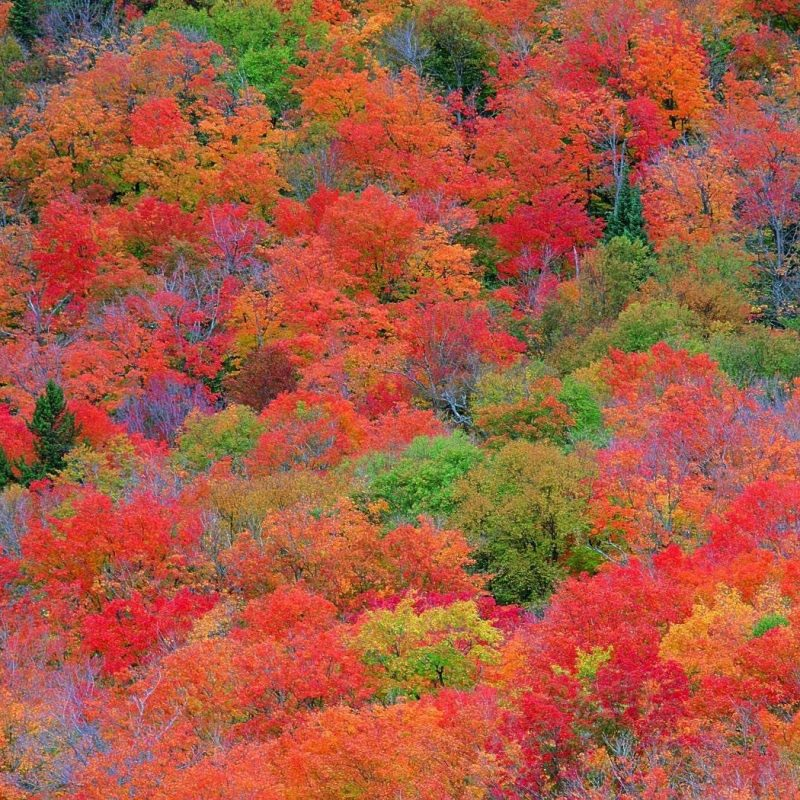 10 Latest Fall Colors Desktop Wallpaper FULL HD 1080p For PC Desktop 2020 free download fall foliage wallpapers for desktop wallpaper cave 3 800x800