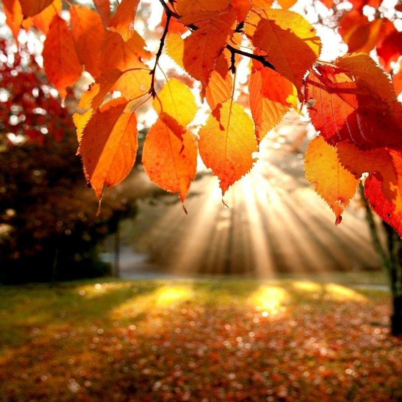 10 New Fall Leaves Desktop Backgrounds FULL HD 1080p For PC Background 2018 free download fall foliage wallpapers for desktop wallpaper cave 6 800x800