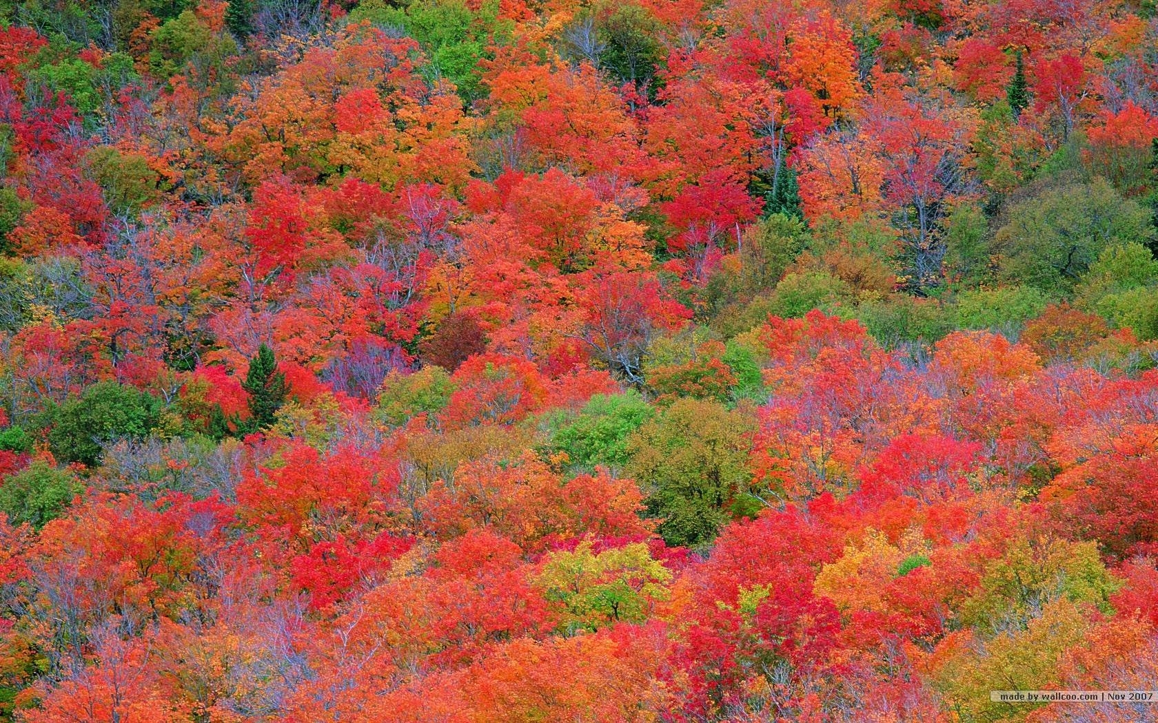 fall foliage wallpapers for desktop - wallpaper cave