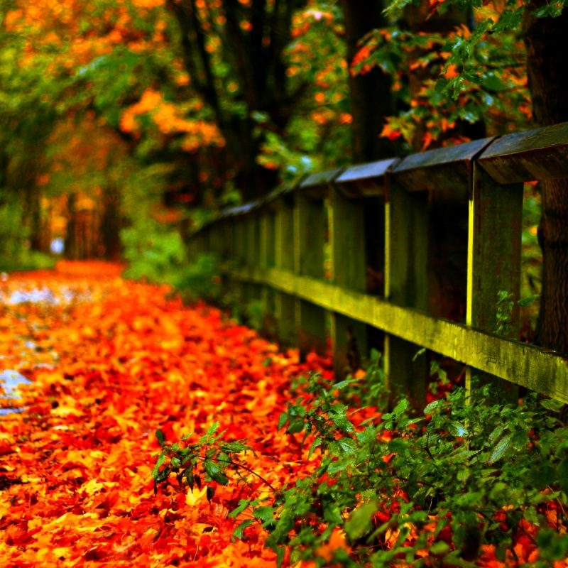 10 Best Fall Leaves Computer Wallpaper FULL HD 1080p For PC Desktop 2021 free download %name