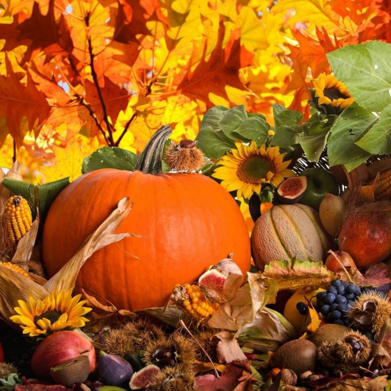 10 Top Fall Harvest Wallpaper Backgrounds FULL HD 1920×1080 For PC Background 2018 free download fall harvest background natures wallpapers pinterest autumn 800x800