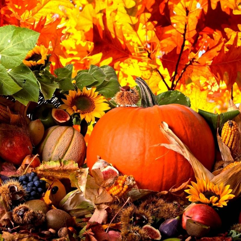 10 Top Autumn Harvest Desktop Backgrounds FULL HD 1080p For PC Background 2020 free download fall harvest wallpaper high quality natures wallpapers pinterest 800x800