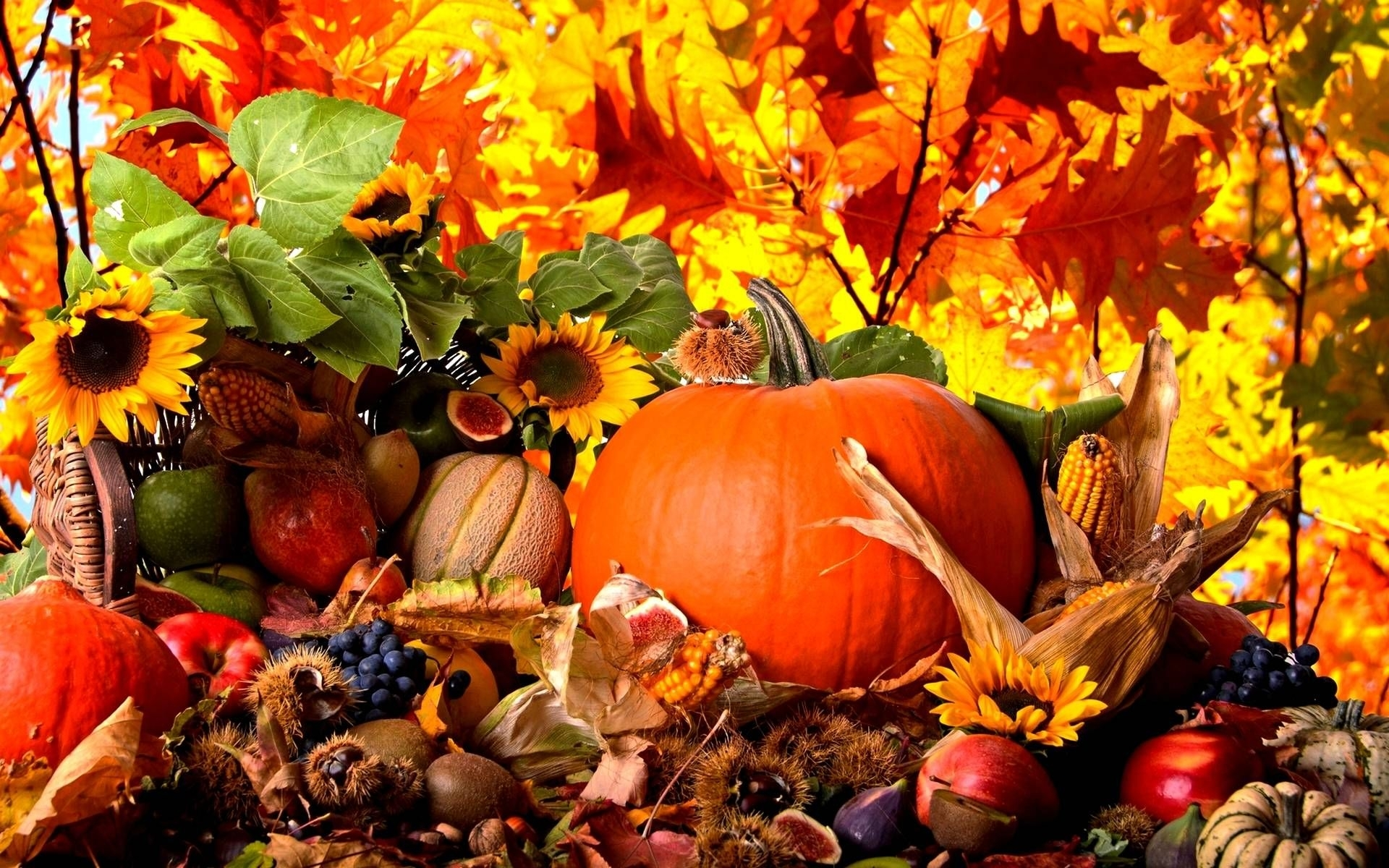 fall harvest wallpaper high quality | natures wallpapers | pinterest