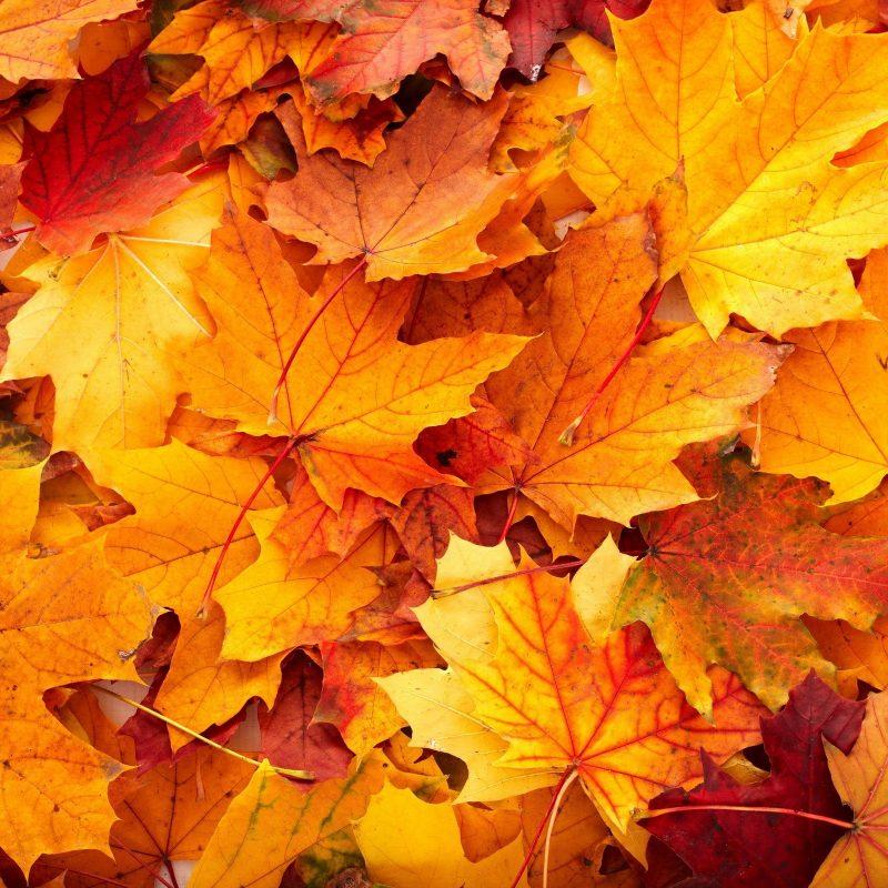 10 New Fall Leaves Desktop Backgrounds FULL HD 1080p For PC Background 2018 free download fall leaves desktop background c2b7e291a0 download free stunning wallpapers 800x800
