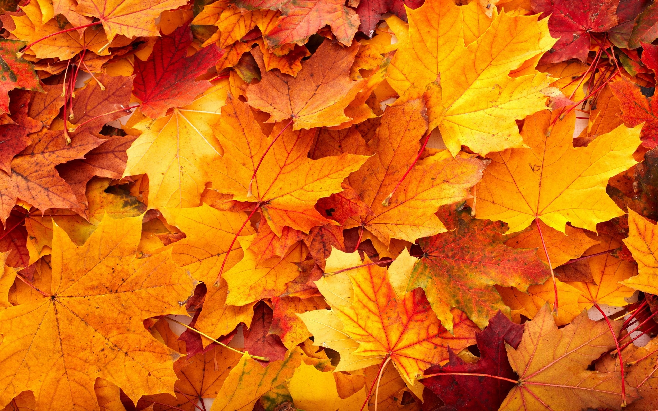 fall leaves desktop background ·① download free stunning wallpapers