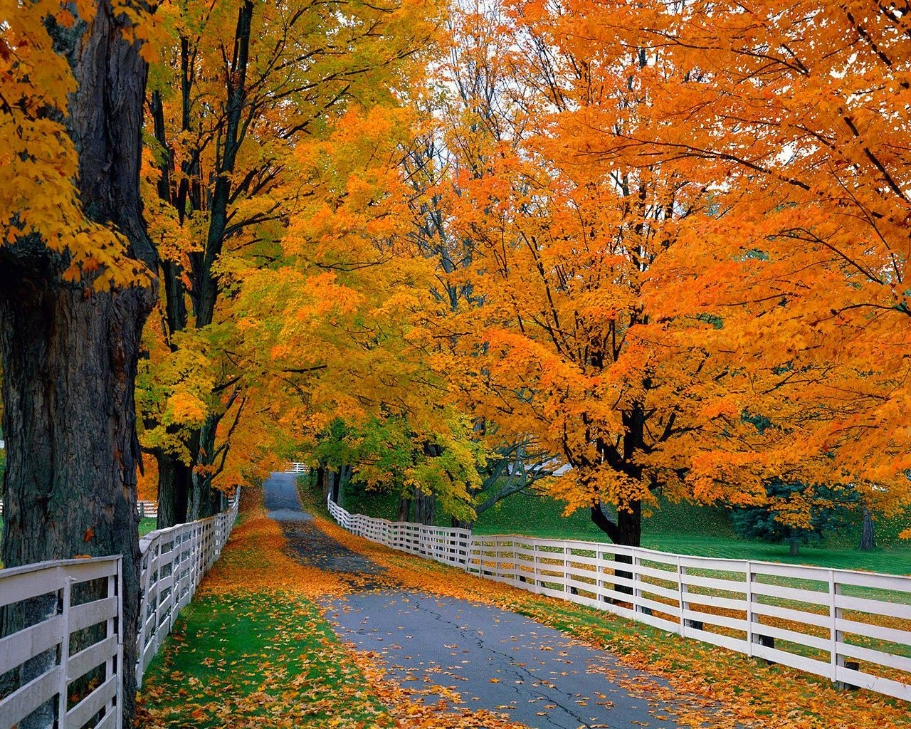 fall leaves desktop wallpapers free download - live 4k wallpapers