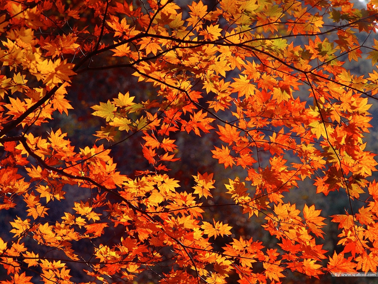 fall leaves tumblr hd desktop wallpaper, instagram photo, background