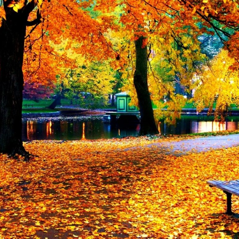 10 Best Fall Leaves Computer Wallpaper FULL HD 1080p For PC Desktop 2021 free download fall leaves wallpaper for iphone natures wallpapers pinterest 1 800x800