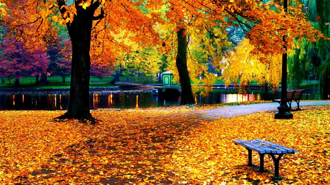 fall leaves wallpaper for iphone   natures wallpapers   pinterest