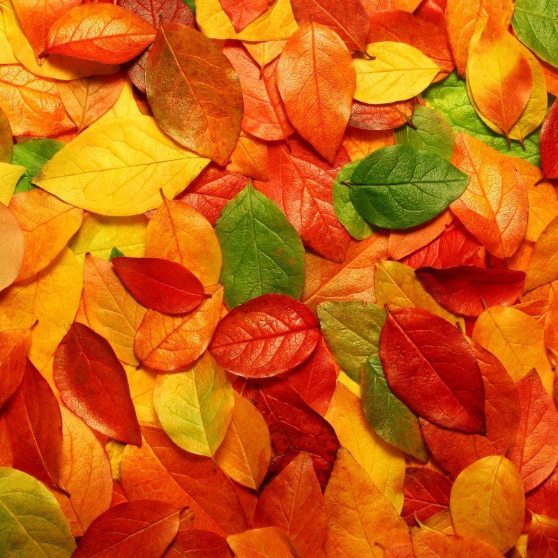 10 Latest Fall Leaves Desktop Background FULL HD 1920×1080 For PC Desktop 2018 free download fall leaves wallpaper hd desktop background 800x800