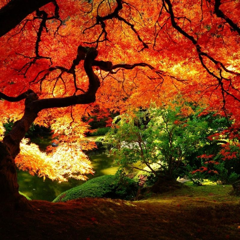 10 Latest Computer Wallpaper Nature Fall FULL HD 1920×1080 For PC Background 2018 free download fall scenery desktop wallpaper autumn pinterest scenery and 1 800x800