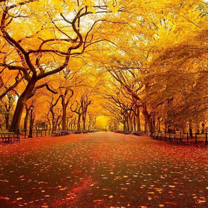 10 Best Autumn Scenery Wallpaper Hd FULL HD 1920×1080 For PC Desktop 2018 free download fall scenery image media file pixelstalk 800x800