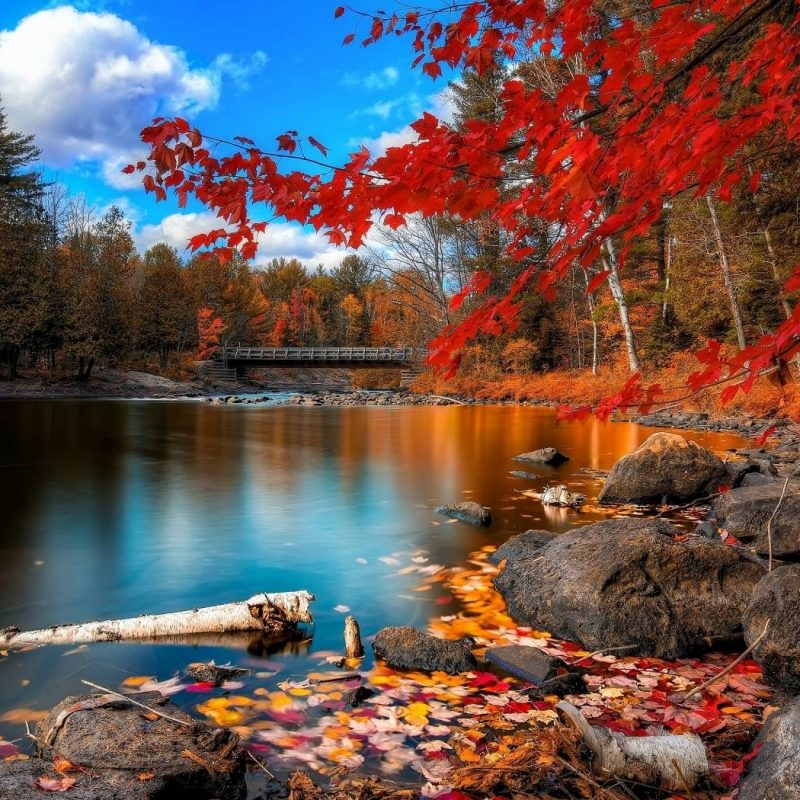 10 Most Popular Beautiful Fall Scenery Background FULL HD 1080p For PC Background 2020 free download fall scenery wallpapers wallpaper cave 800x800
