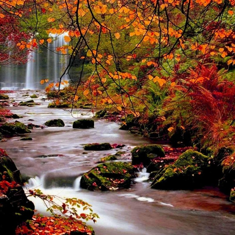 10 Latest Computer Wallpaper Nature Fall FULL HD 1920×1080 For PC Background 2018 free download fall trees autumn trees nature landscape leaf leaves desktop 1 800x800