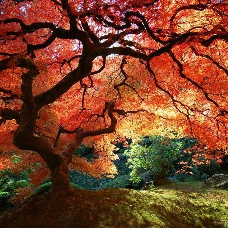 10 Top Fall Trees Desktop Backgrounds FULL HD 1080p For PC Background 2021 free download fall trees backgrounds desktop background 800x800