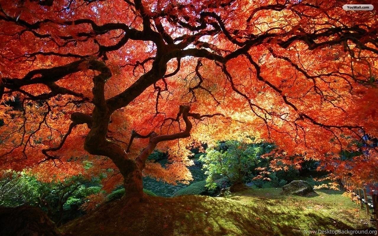 fall trees backgrounds desktop background