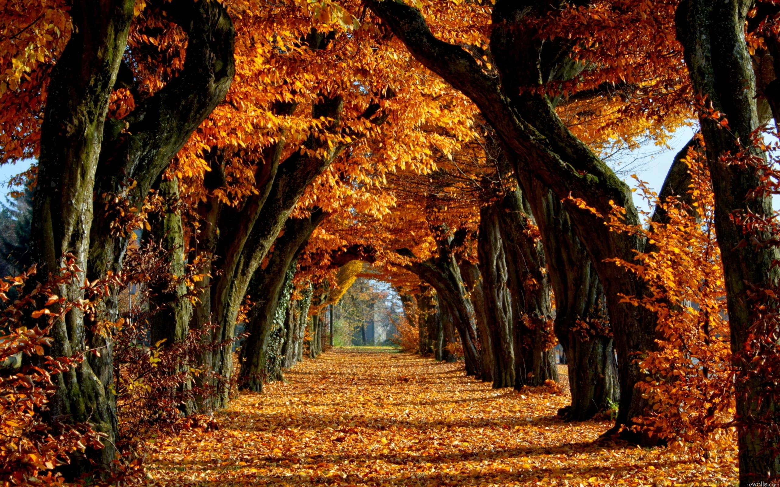 fall trees wallpapers - wallpaper cave