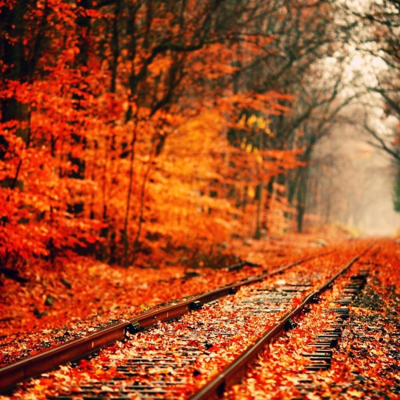 10 Latest Autumn Wallpaper For Pc FULL HD 1080p For PC Background 2021 free download fall wallpaper 15881 1680x1050 px hdwallsource 800x800